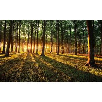 Fototapety les a západ slunce, rozmer 368 cm x 254 cm