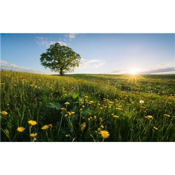 Vliesové fototapety Hefele jaro, rozmer 450 cm x 280 cm