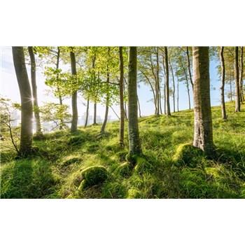 Vliesové fototapety Hefele magický bukový les, rozmer 450 cm x 280 cm