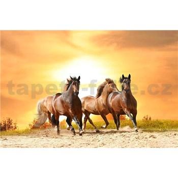 Vliesové fototapety kone pri západe slnka rozmer 375 cm x 250 cm
