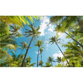 Vliesové fototapety Hefele kokosové nebo II, rozmer 450 cm x 280 cm