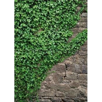 Fototapety brečtan na kamenné múry, rozmer 183 x 254 cm
