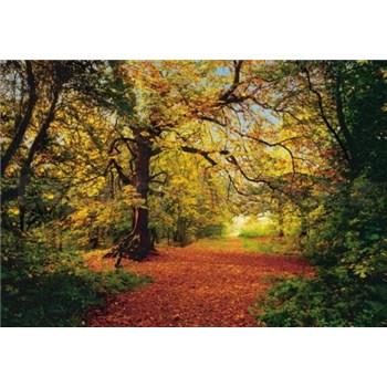 Fototapeta Autumn Forest, rozmer 388 x 270 cm