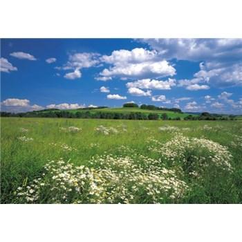 Fototapeta Meadow, rozmer 368 x 254 cm