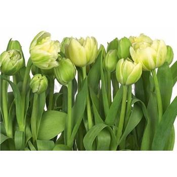 Fototapeta tulipány, rozmer 368 x 254 cm