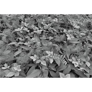 Fototapety lesné fauna, rozmer 368 x 254 cm