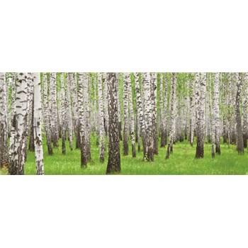 Vliesové fototapety brezy, rozmer 250 x 104 cm