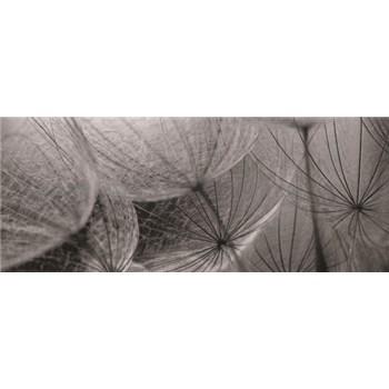 Vliesové fototapety biele púpavy, rozmer 250 x 104 cm