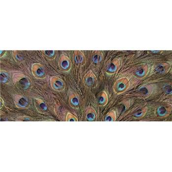 Vliesové fototapety pávie perie, rozmer 250 x 104 cm