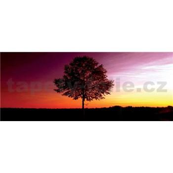 Vliesové fototapety strom, rozmer 250 x 104 cm