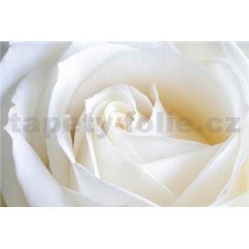 Vliesové fototapety biela ruža, rozmer 312 cm x 219 cm