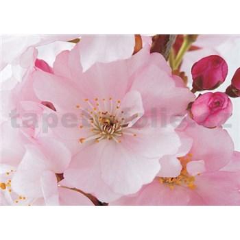 Fototapety rozkvitnuté púčik, rozmer 368 cm x 254 cm