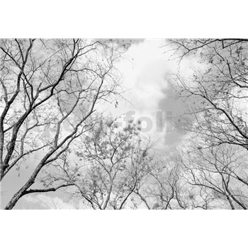 Fototapety vrcholky stromov rozmer 366 cm x 254 cm
