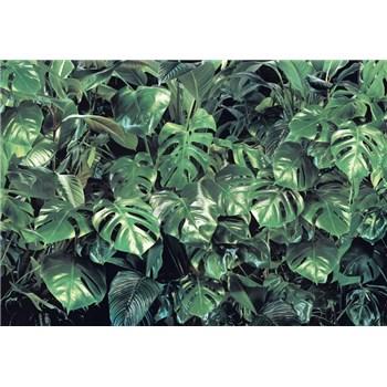 Fototapety zeleň rozmer 368 cm x 254 cm