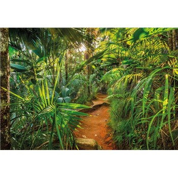 Fototapety Jungle Trail