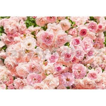 Fototapety růže, rozmer 368 x 254 cm