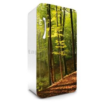 Samolepiace tapety na chladničku les na jeseň rozmer 120 cm x 65 cm