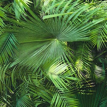 Vliesové tapety na stenu NEUE BUDE 2.0 palmové listy