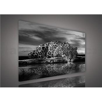 Obraz na plátne jaguár čiernobiely 100 x 75 cm