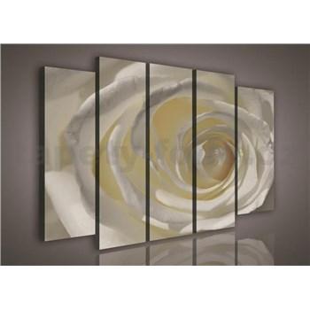 Obraz na plátne ruže biela 150 x 100 cm