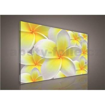 Obraz na stenu žlté kvety Plumeria 75 x 100 cm