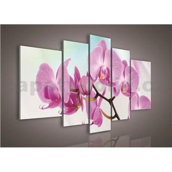 Obraz na plátne orchidea 170 x 100 cm