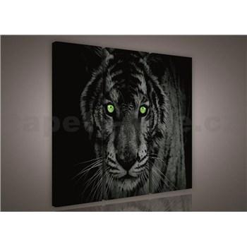 Obraz na plátne tiger zelené oči 90 x 80 cm