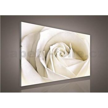 Obraz na stenu biela ruža 75 x 100 cm