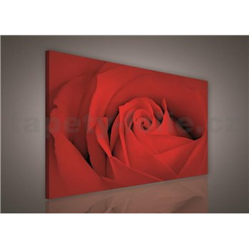 Obraz na stenu červená ruža 75 x 100 cm