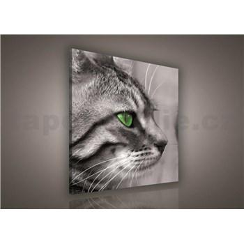 Obraz na stenu mačka 80 x 80 cm