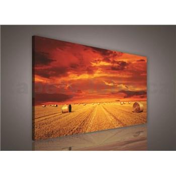 Obraz na stenu poľa po žatve 75 x 100 cm