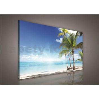 Obraz na stenu palmy na pláži 100 x 75 cm