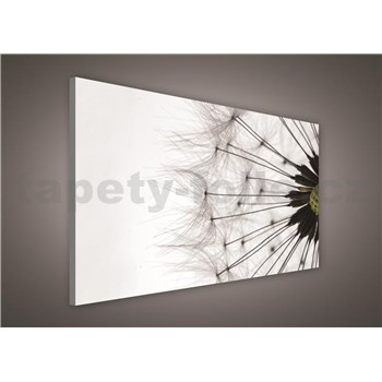 Obraz na stenu púpava 75 x 100 cm
