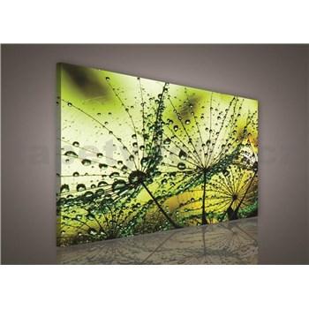 Obraz na stenu ranná rosa zelená 75 x 100 cm