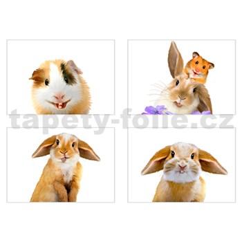 Samolepky na stenu selfie morča a králiček rozmer 45 x 65 cm