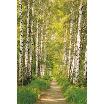 Vliesové fototapety brezy rozmer 124 cm x 184 cm