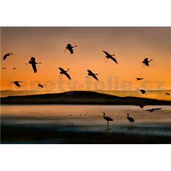 Fototapety vtáky pri západe slnka rozmer 368 x 254 cm