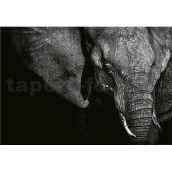 Vliesové fototapety krásny slon rozmer 368 x 254 cm