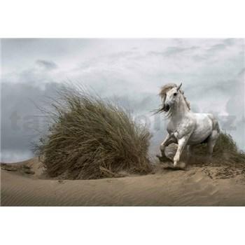 Vliesové fototapety divoký biely kôň rozmer 368 x 254 cm