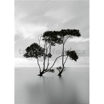 Fototapety stromy v stojatej vode rozmer 184 x 254 cm