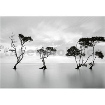 Fototapety stromy v stojatej vode rozmer 368 x 254 cm