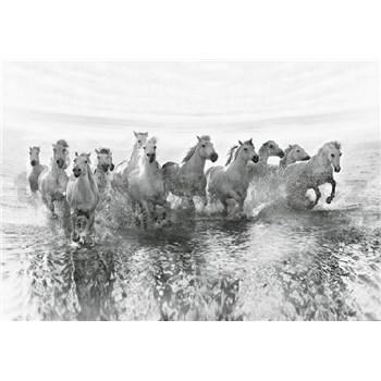 Vliesové fototapety biele kone rozmer 368 x 254 cm