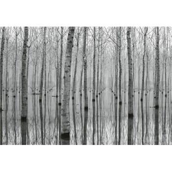 Fototapety březový les vo vode rozmer 368 x 254 cm
