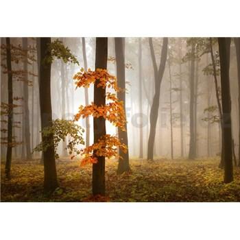 Vliesové fototapety jesenný les v hmle rozmer 368 x 254 cm
