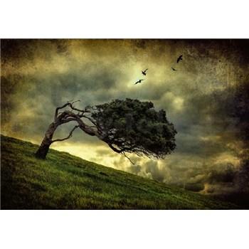 Vliesové fototapety desivý strom rozmer 368 x 254 cm