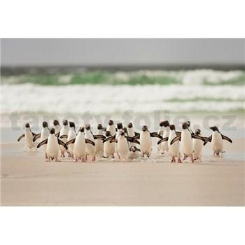 Vliesové fototapety tučniaky rozmer 368 x 254 cm