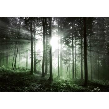 Vliesové fototapety slnečné lúče v lese rozmer 368 x 254 cm