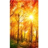 Vliesové fototapety slnečný svit v les rozmer 150 cm x 250 cm