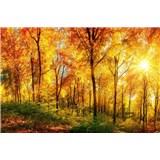 Vliesové fototapety slnečný svit v lese rozmer 375 cm x 250 cm