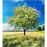 Vliesové fototapety rozkvitnutý strom rozmer 225 cm x 250 cm